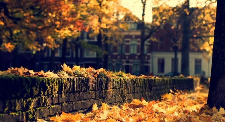 Fall - lungs and large intestine health.